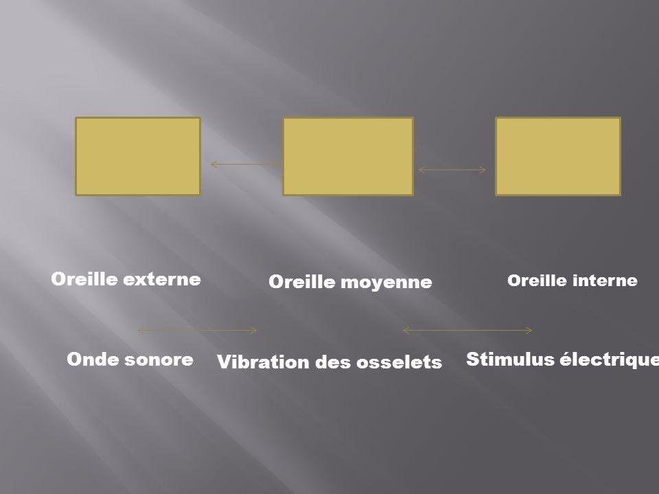 Vibration des osselets Stimulus électrique