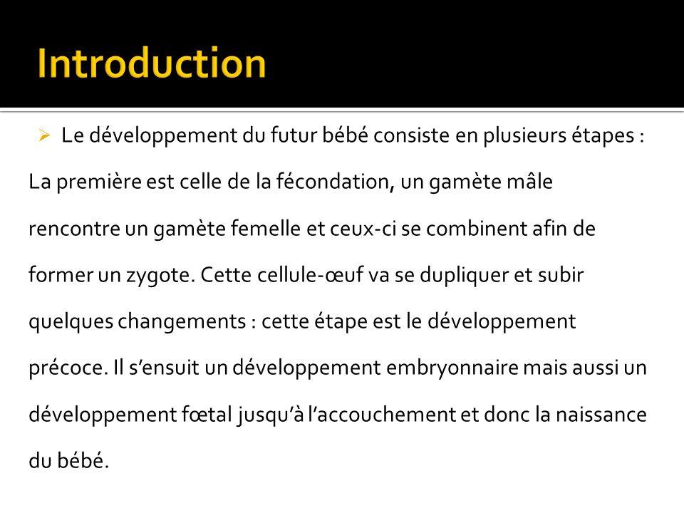 Introduction Le développement du futur bébé consiste en plusieurs étapes :