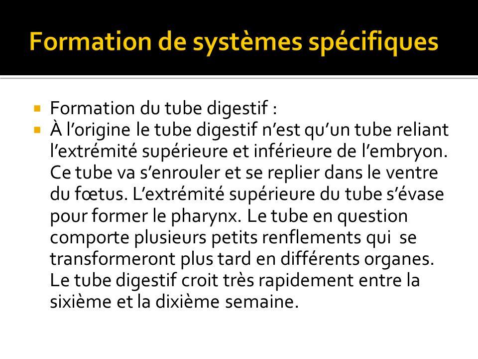 Formation de systèmes spécifiques