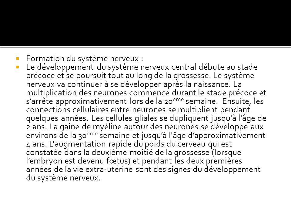 Formation du système nerveux :