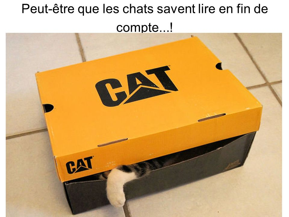 Peut-être que les chats savent lire en fin de compte...!