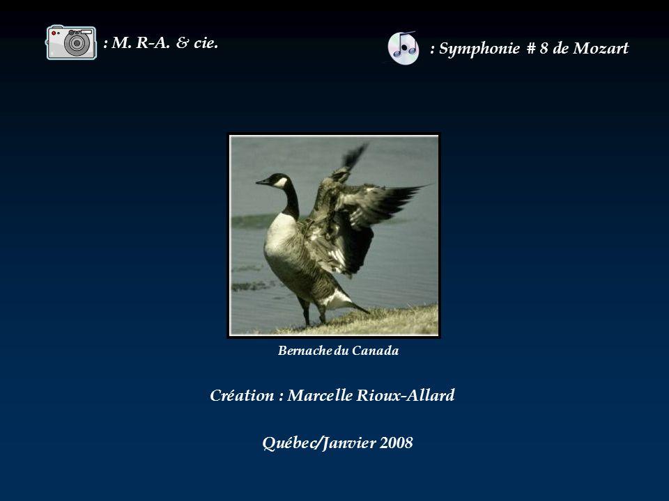 Création : Marcelle Rioux-Allard