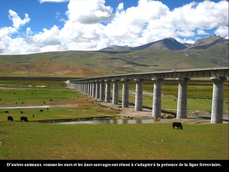 D'autres animaux comme les ours et les ânes sauvages ont réussi à s adapter à la présence de la ligne ferroviaire.