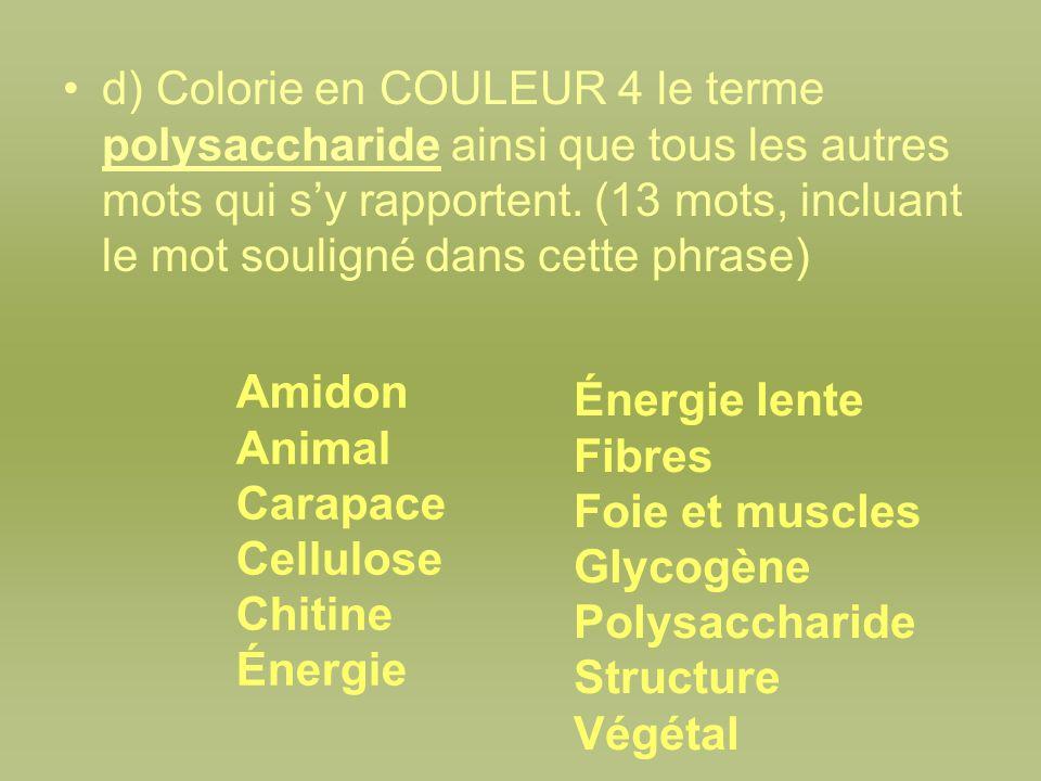 d) Colorie en COULEUR 4 le terme polysaccharide ainsi que tous les autres mots qui s'y rapportent. (13 mots, incluant le mot souligné dans cette phrase)