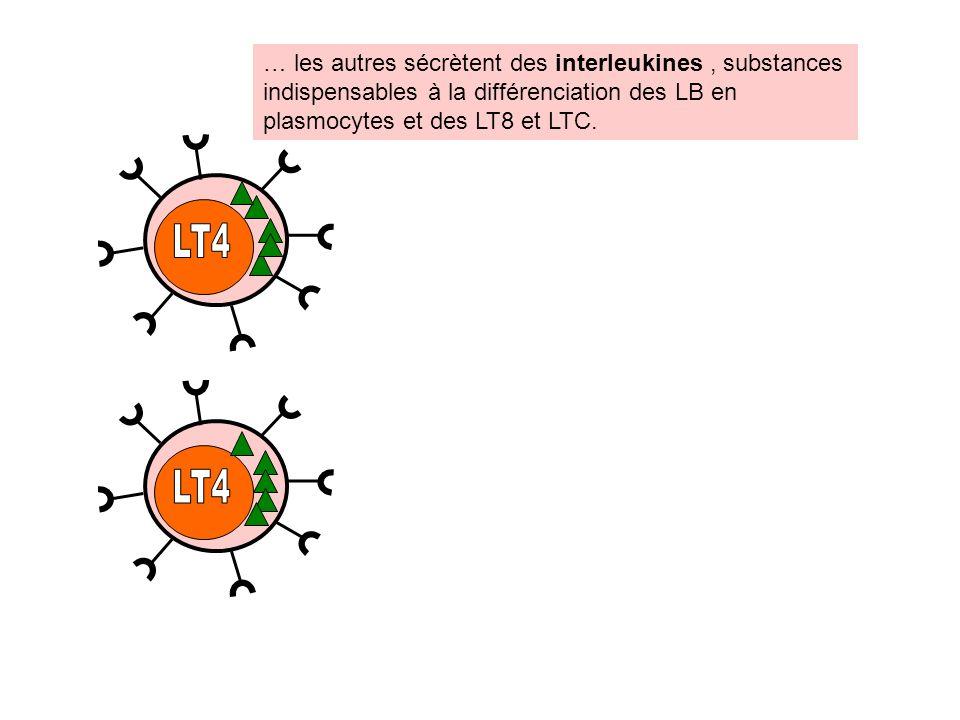 … les autres sécrètent des interleukines , substances indispensables à la différenciation des LB en plasmocytes et des LT8 et LTC.