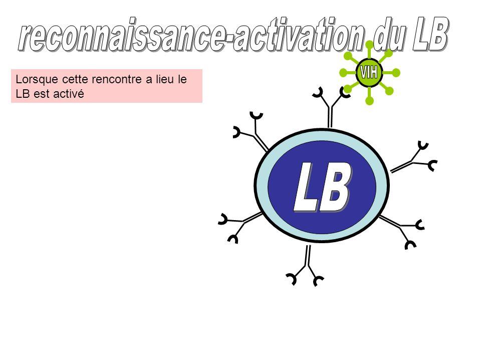 reconnaissance-activation du LB