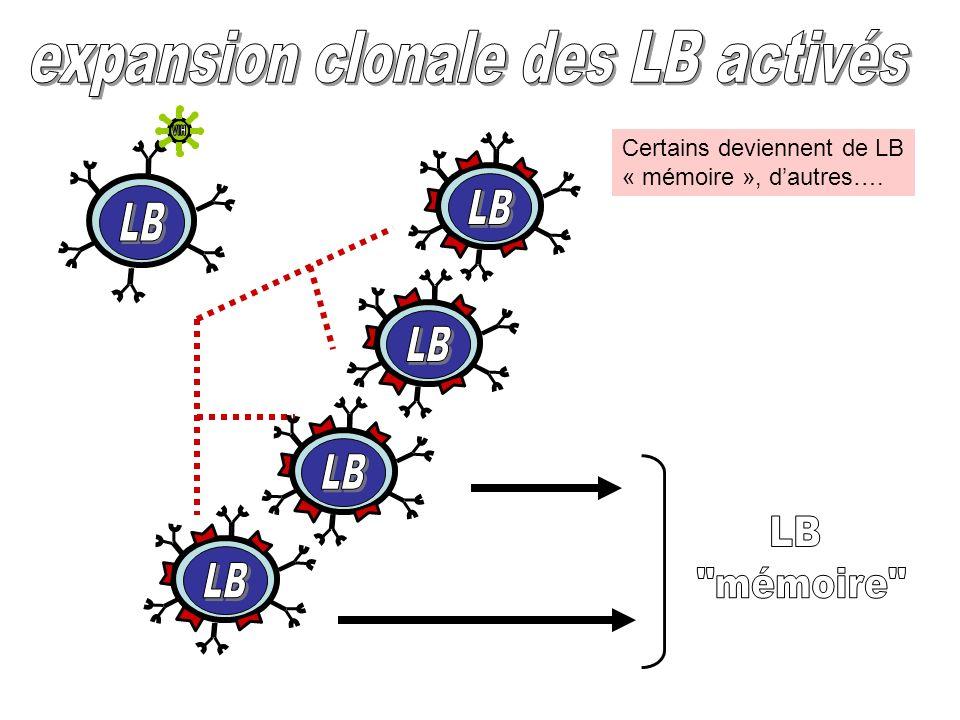 expansion clonale des LB activés