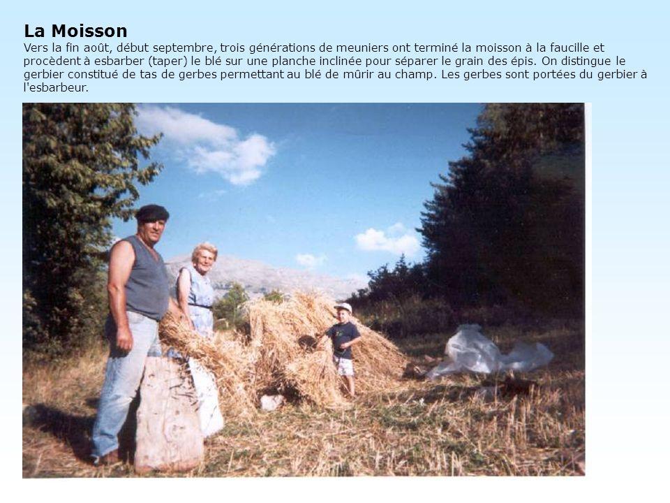 La Moisson Vers la fin août, début septembre, trois générations de meuniers ont terminé la moisson à la faucille et procèdent à esbarber (taper) le blé sur une planche inclinée pour séparer le grain des épis.