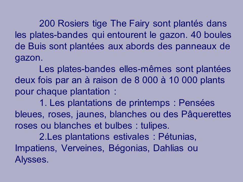 200 Rosiers tige The Fairy sont plantés dans les plates-bandes qui entourent le gazon.
