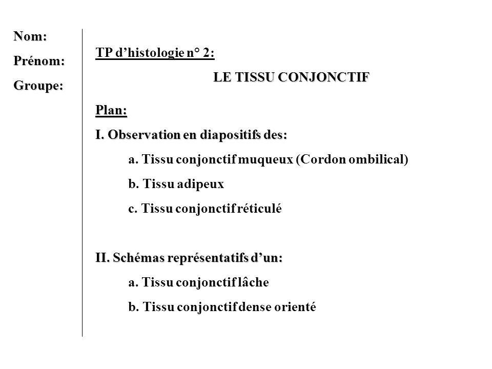 Nom: Prénom: Groupe: TP d'histologie n° 2: LE TISSU CONJONCTIF. Plan: I. Observation en diapositifs des: