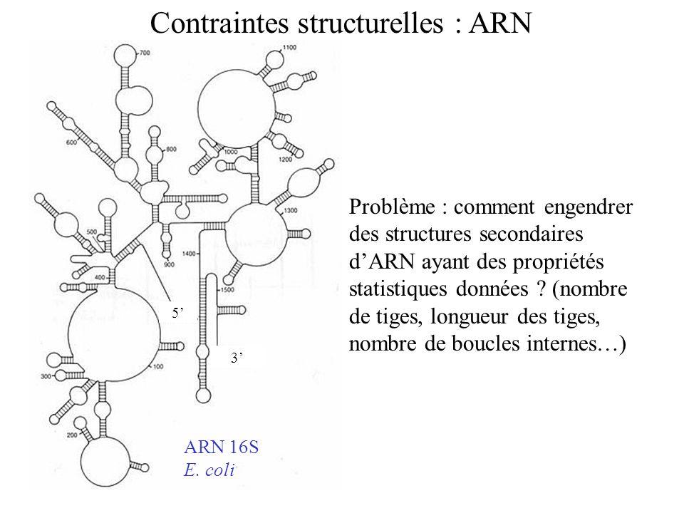 Contraintes structurelles : ARN