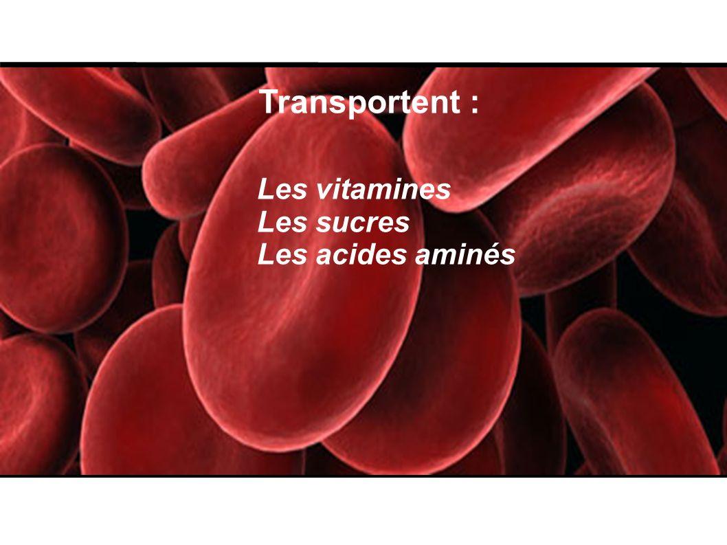 Transportent : Les vitamines Les sucres Les acides aminés