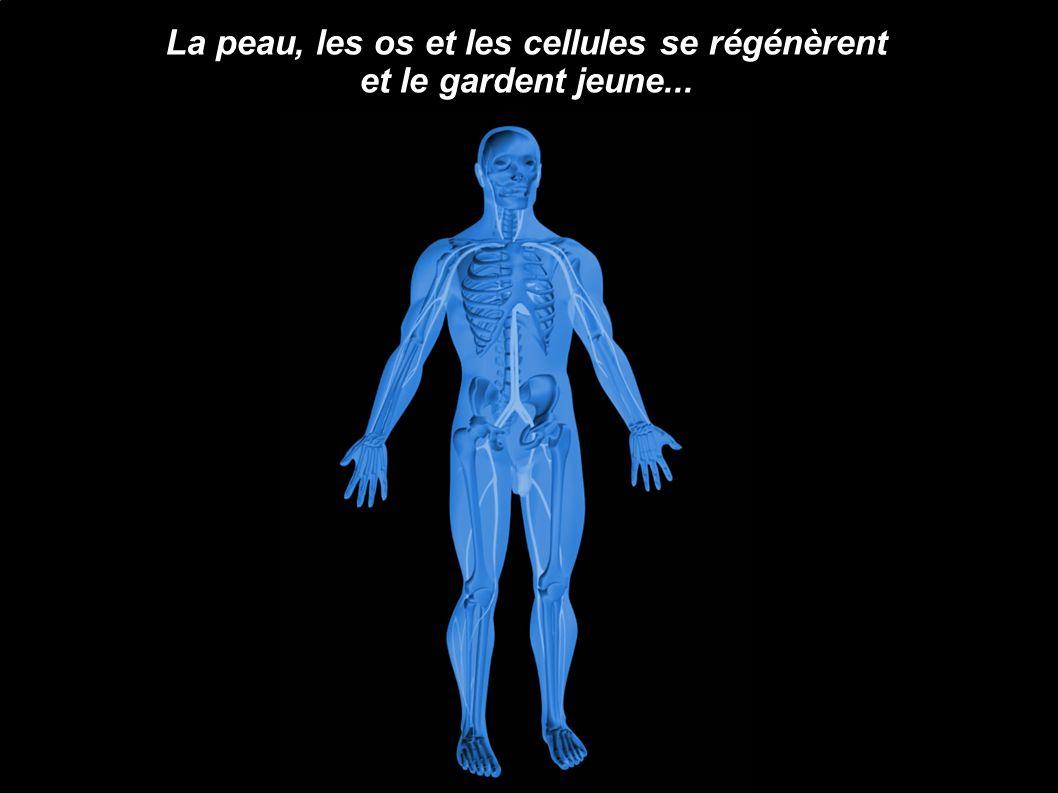 La peau, les os et les cellules se régénèrent