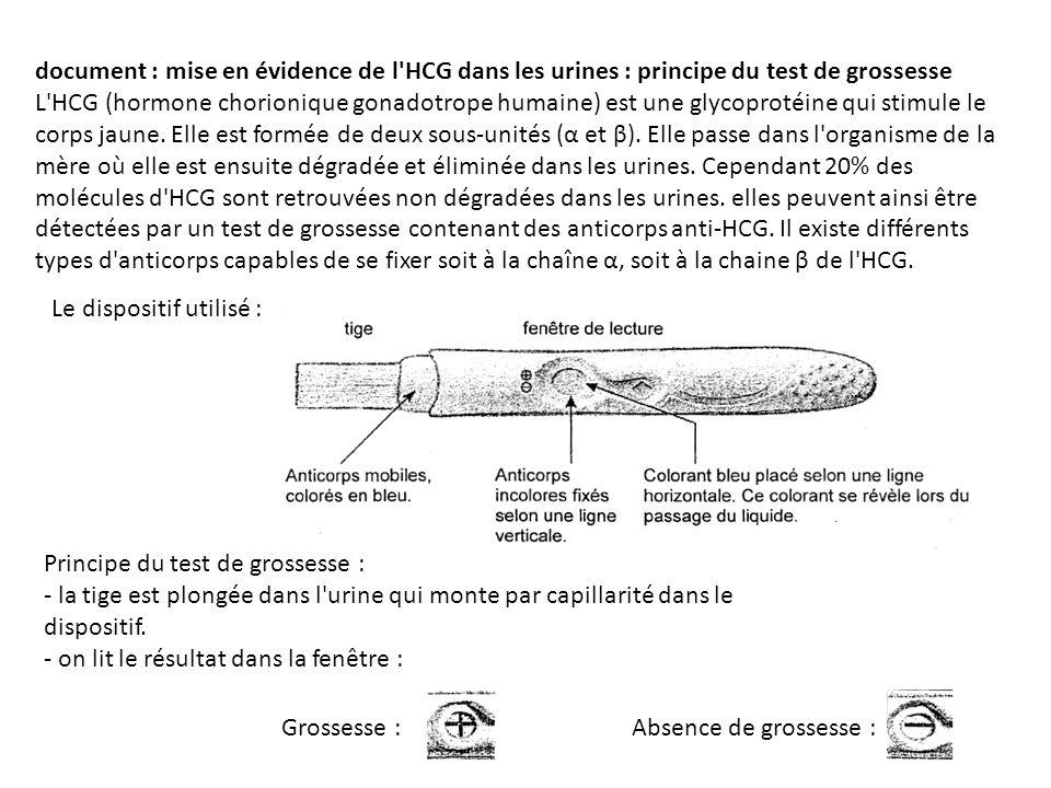 document : mise en évidence de l HCG dans les urines : principe du test de grossesse