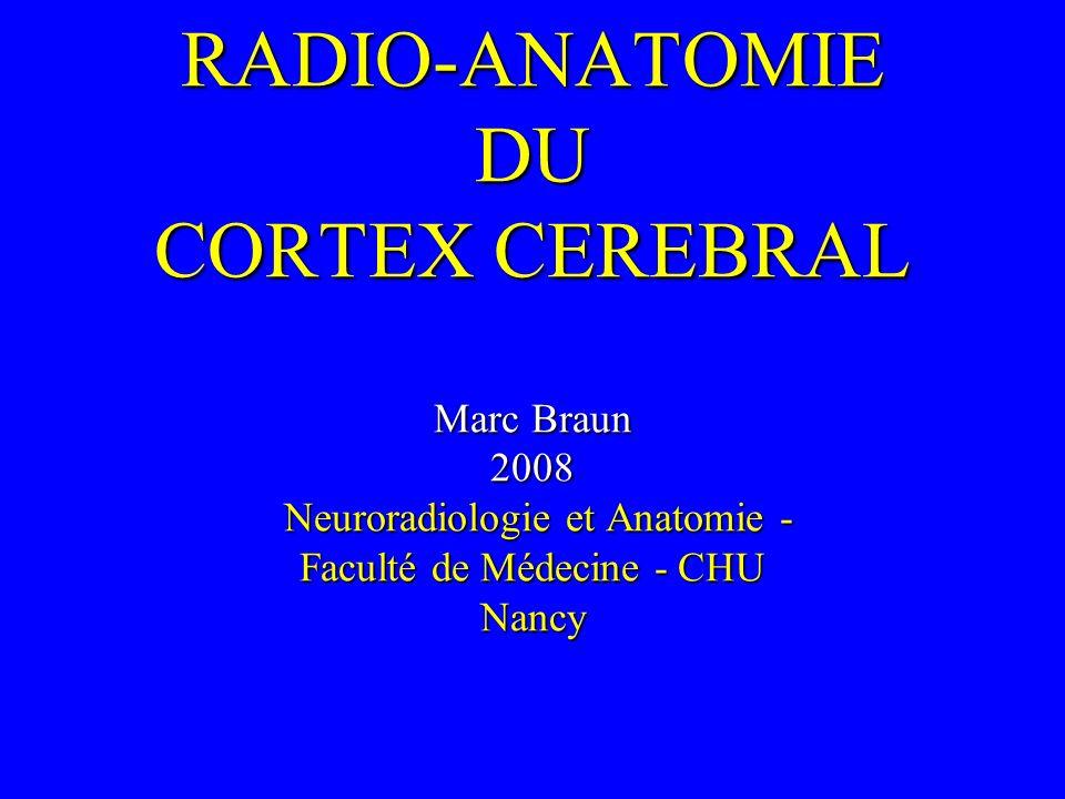 RADIO-ANATOMIE DU CORTEX CEREBRAL Marc Braun 2008 Neuroradiologie et Anatomie - Faculté de Médecine - CHU Nancy