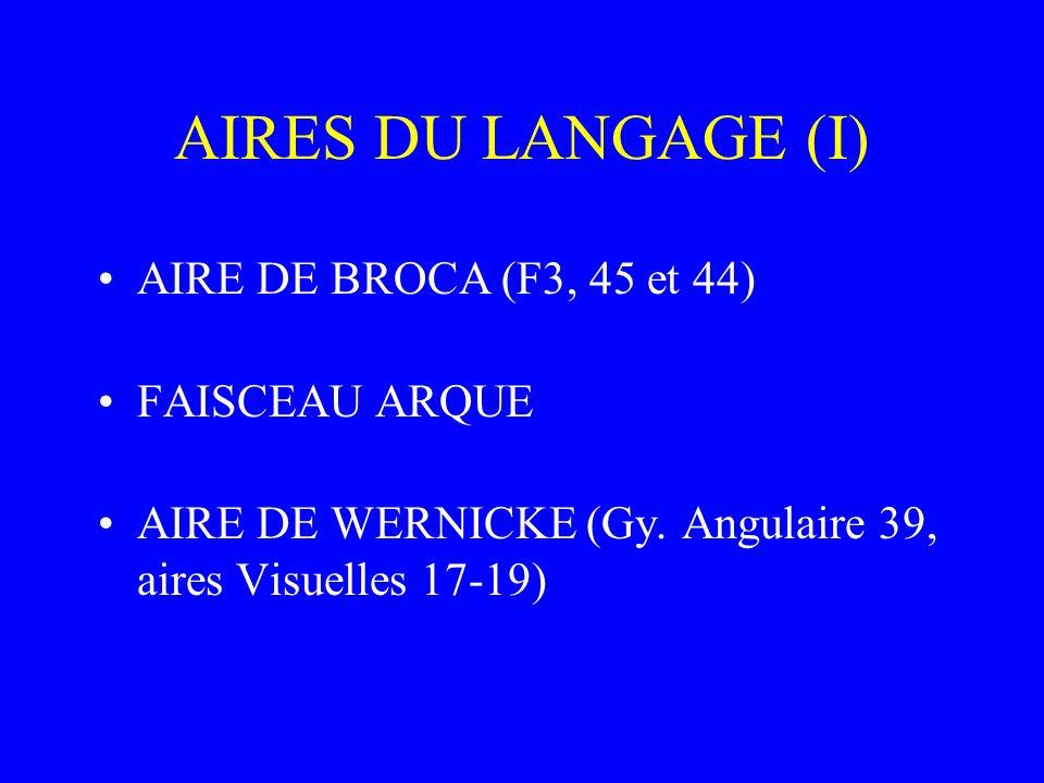 AIRES DU LANGAGE (I) AIRE DE BROCA (F3, 45 et 44) FAISCEAU ARQUE