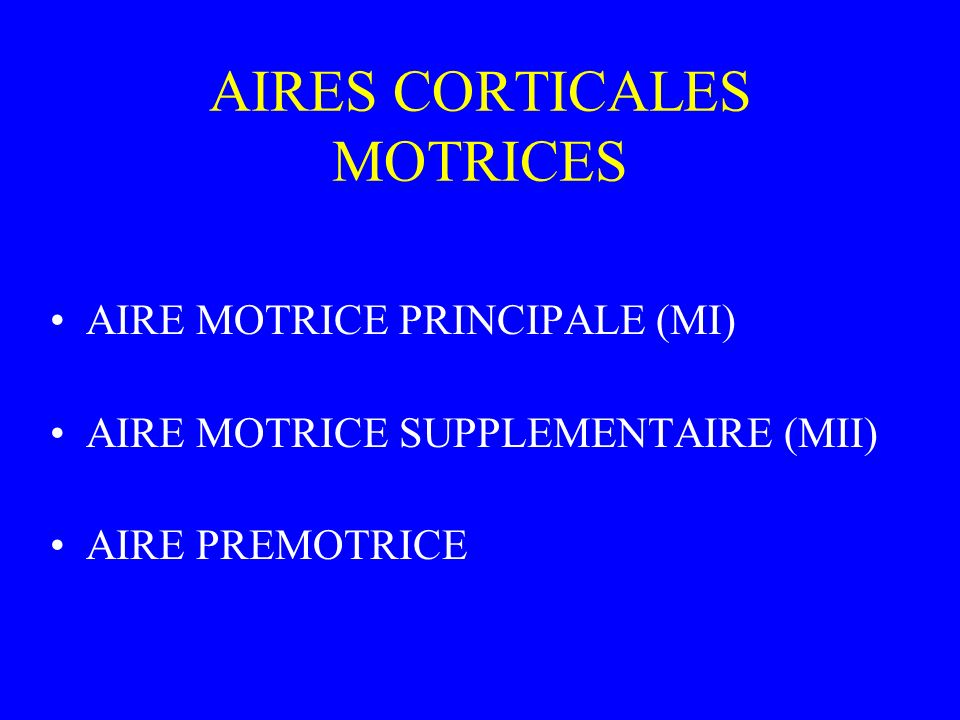 AIRES CORTICALES MOTRICES