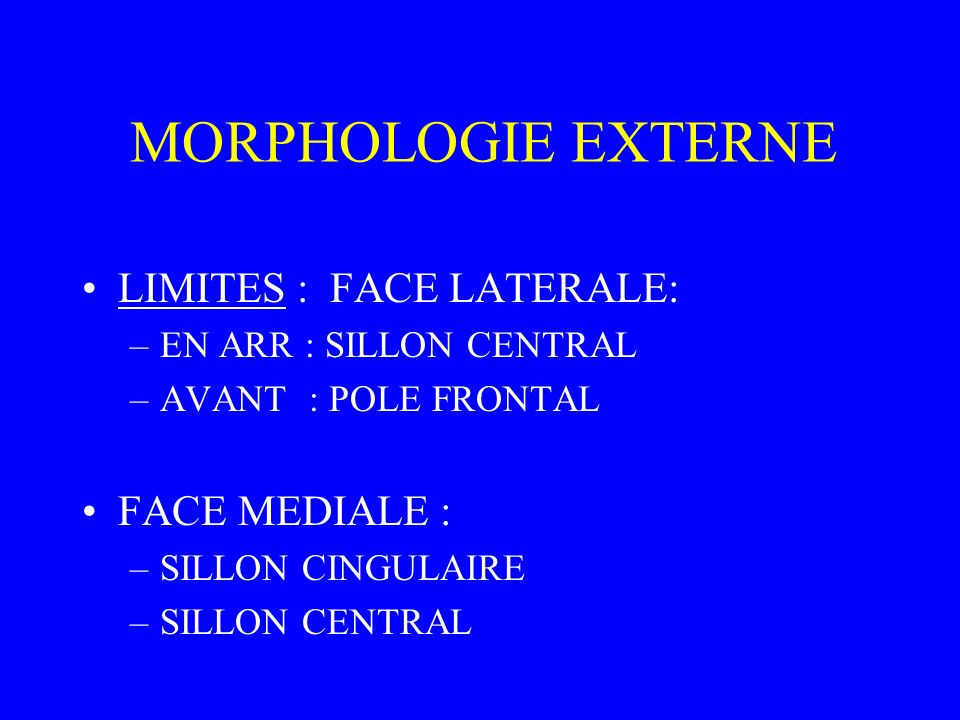 MORPHOLOGIE EXTERNE LIMITES : FACE LATERALE: FACE MEDIALE :