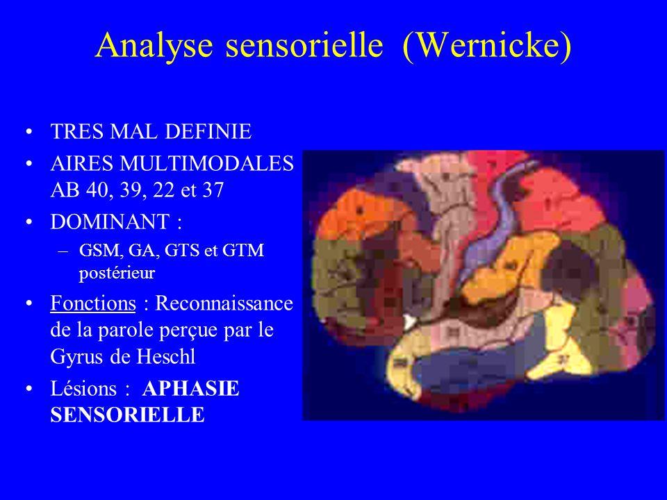 Analyse sensorielle (Wernicke)