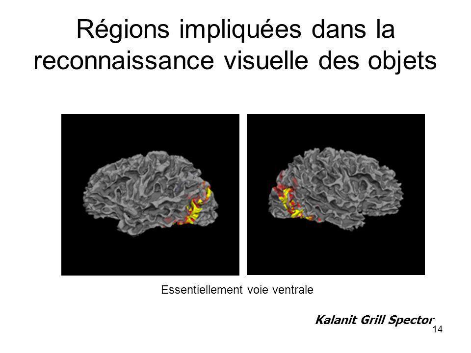Régions impliquées dans la reconnaissance visuelle des objets