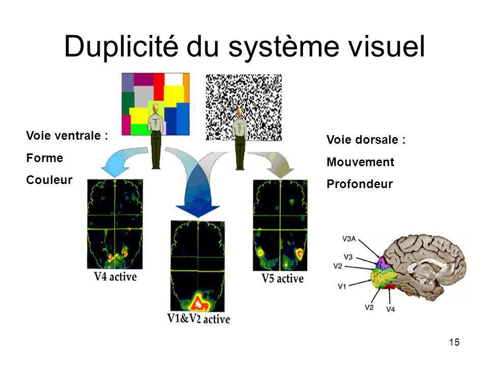 Duplicité du système visuel