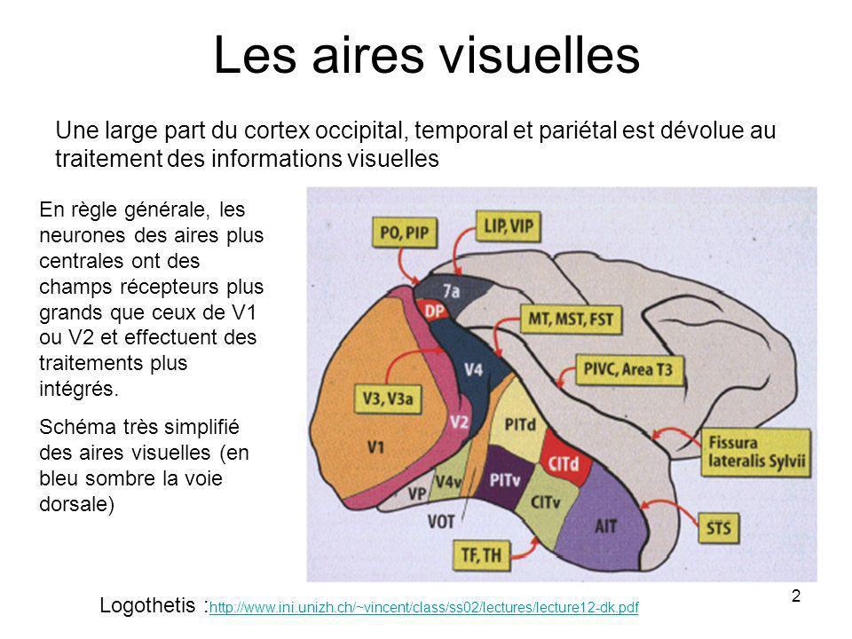 Les aires visuelles Une large part du cortex occipital, temporal et pariétal est dévolue au traitement des informations visuelles.