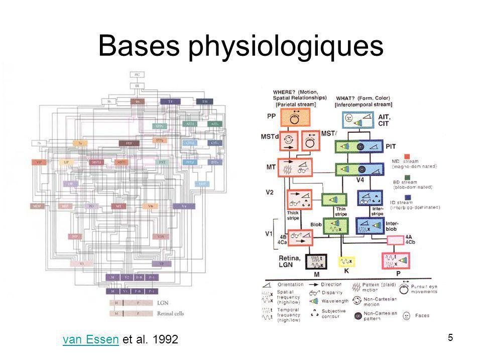 Bases physiologiques van Essen et al. 1992