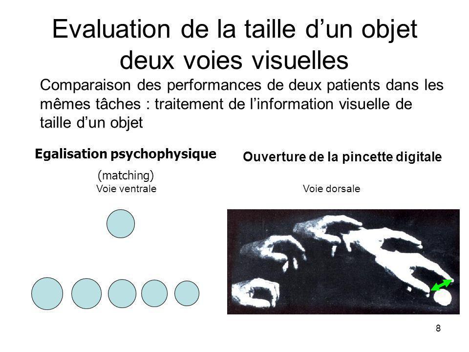 Evaluation de la taille d'un objet deux voies visuelles