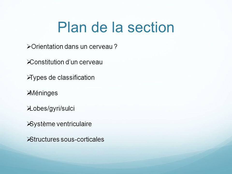 Plan de la section Orientation dans un cerveau