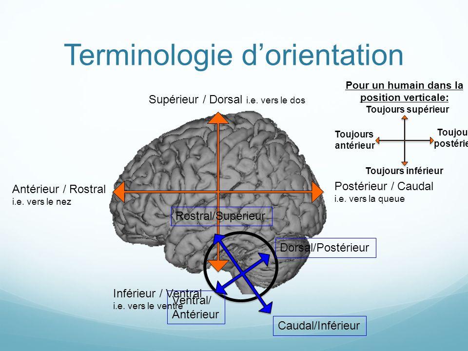 Terminologie d'orientation