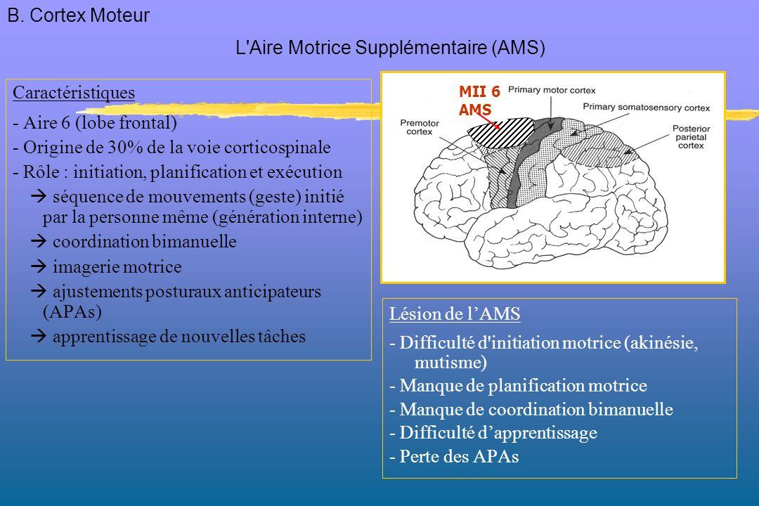 L Aire Motrice Supplémentaire (AMS)