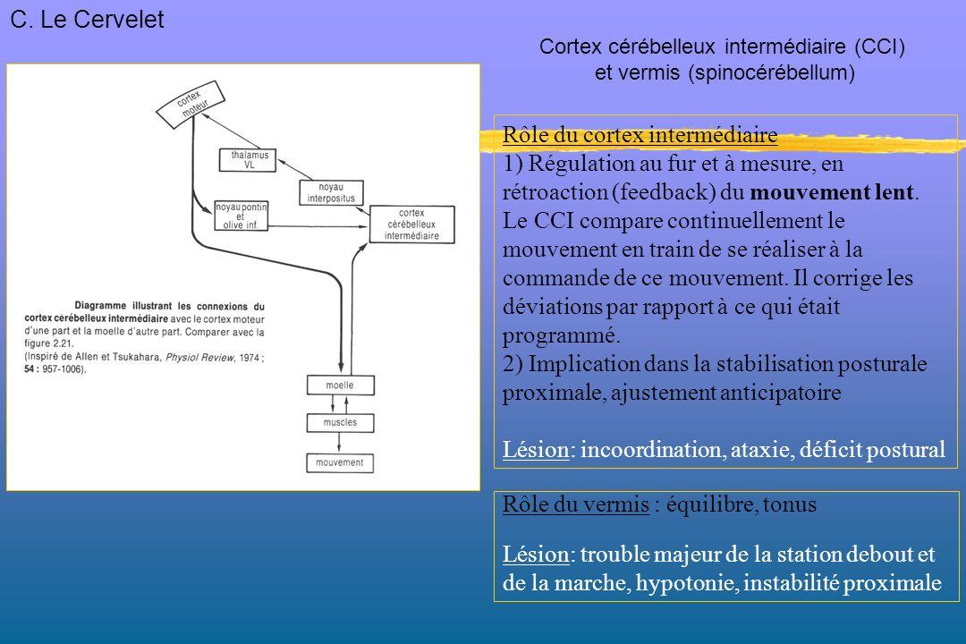 Rôle du cortex intermédiaire 1) Régulation au fur et à mesure, en