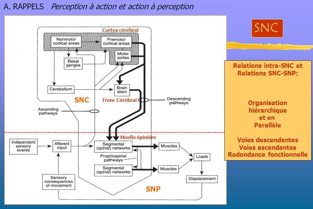 Relations intra-SNC et Redondance fonctionnelle