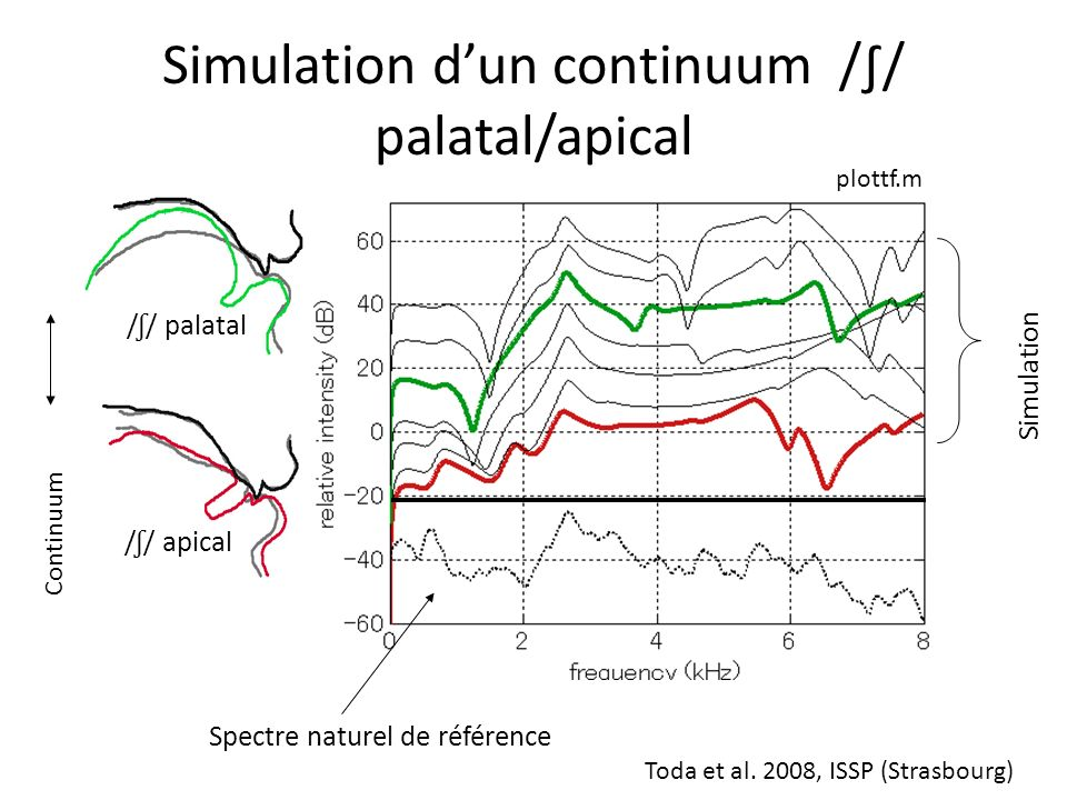 Simulation d'un continuum /∫/ palatal/apical