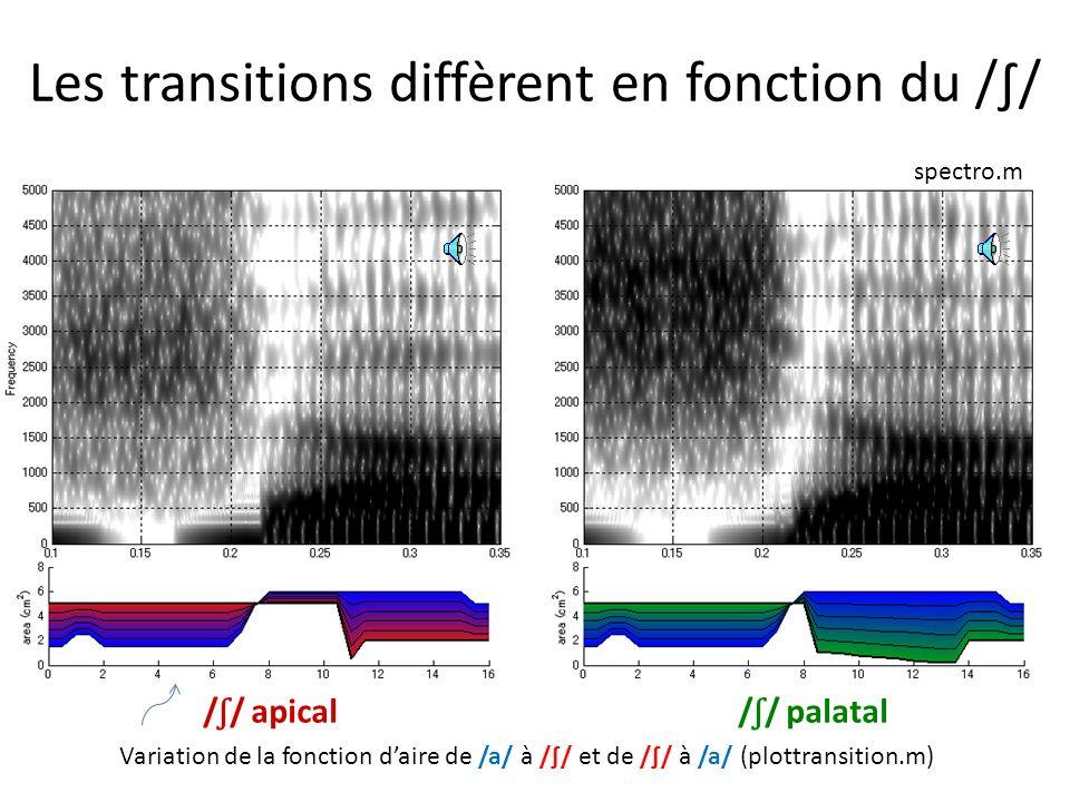 Les transitions diffèrent en fonction du /∫/