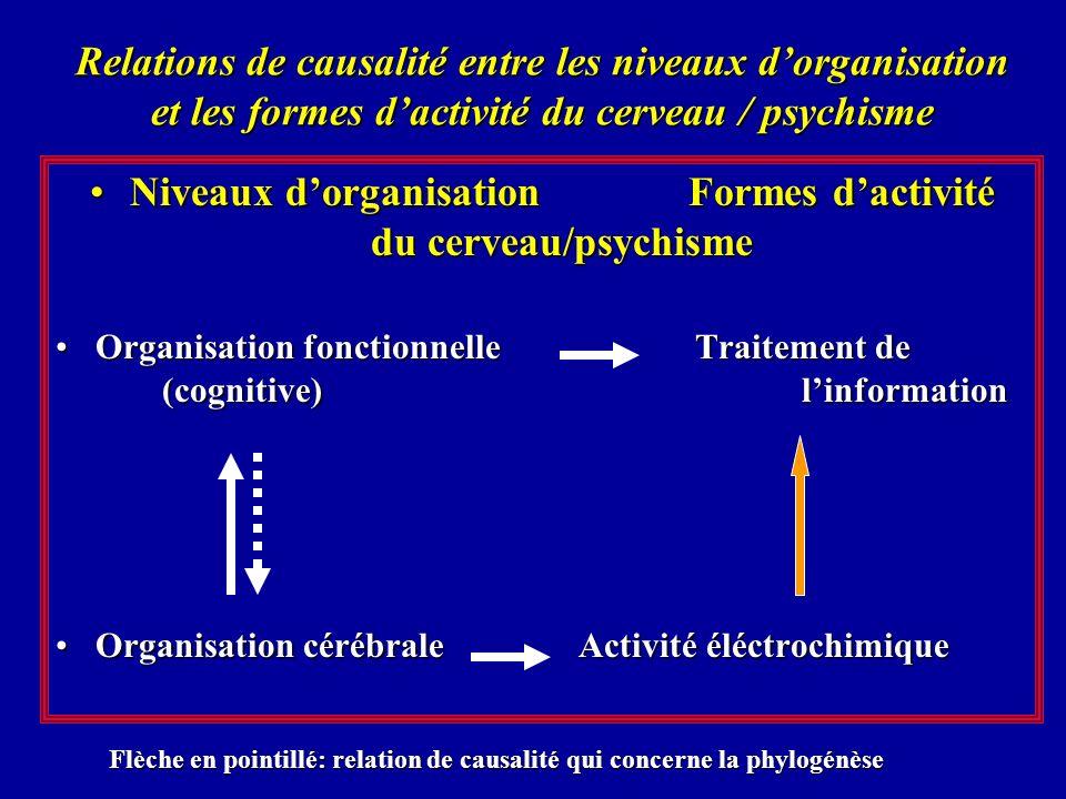 Niveaux d'organisation Formes d'activité du cerveau/psychisme