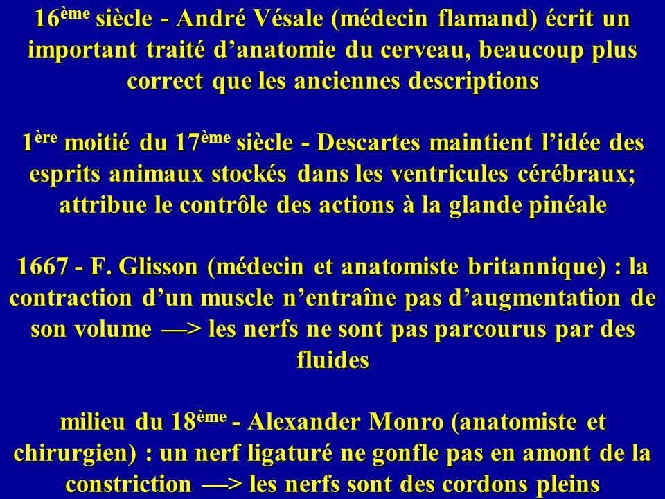 16ème siècle - André Vésale (médecin flamand) écrit un important traité d'anatomie du cerveau, beaucoup plus correct que les anciennes descriptions 1ère moitié du 17ème siècle - Descartes maintient l'idée des esprits animaux stockés dans les ventricules cérébraux; attribue le contrôle des actions à la glande pinéale 1667 - F.