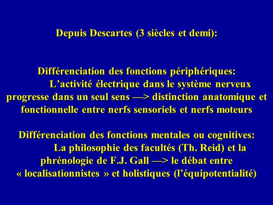 Depuis Descartes (3 siècles et demi): Différenciation des fonctions périphériques: L'activité électrique dans le système nerveux progresse dans un seul sens —> distinction anatomique et fonctionnelle entre nerfs sensoriels et nerfs moteurs Différenciation des fonctions mentales ou cognitives: La philosophie des facultés (Th.