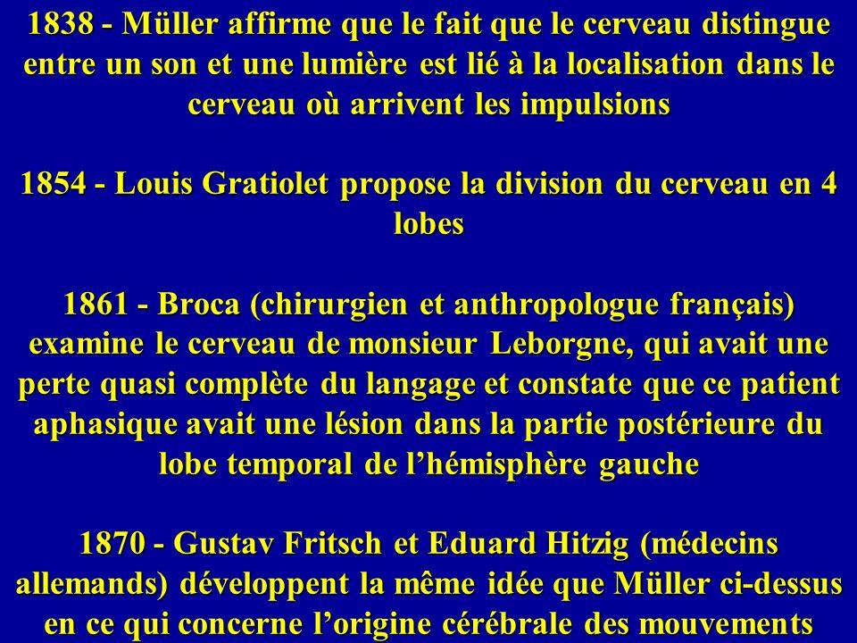 1838 - Müller affirme que le fait que le cerveau distingue entre un son et une lumière est lié à la localisation dans le cerveau où arrivent les impulsions 1854 - Louis Gratiolet propose la division du cerveau en 4 lobes 1861 - Broca (chirurgien et anthropologue français) examine le cerveau de monsieur Leborgne, qui avait une perte quasi complète du langage et constate que ce patient aphasique avait une lésion dans la partie postérieure du lobe temporal de l'hémisphère gauche 1870 - Gustav Fritsch et Eduard Hitzig (médecins allemands) développent la même idée que Müller ci-dessus en ce qui concerne l'origine cérébrale des mouvements