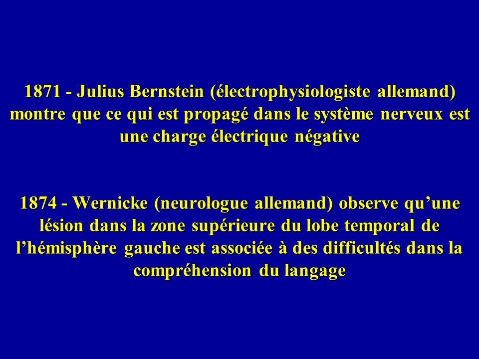 1871 - Julius Bernstein (électrophysiologiste allemand) montre que ce qui est propagé dans le système nerveux est une charge électrique négative 1874 - Wernicke (neurologue allemand) observe qu'une lésion dans la zone supérieure du lobe temporal de l'hémisphère gauche est associée à des difficultés dans la compréhension du langage