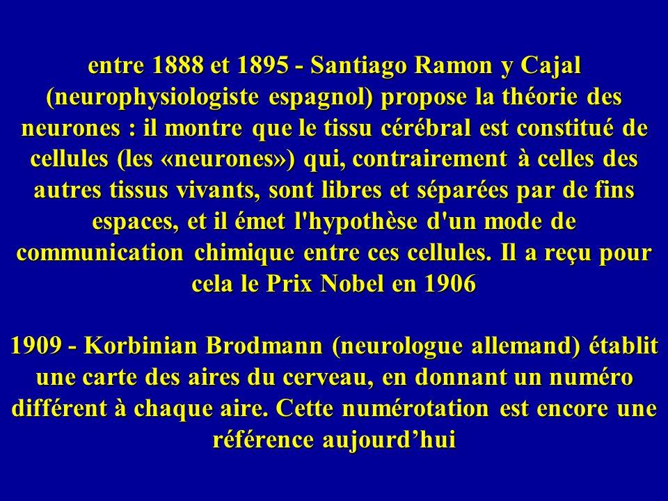 entre 1888 et 1895 - Santiago Ramon y Cajal (neurophysiologiste espagnol) propose la théorie des neurones : il montre que le tissu cérébral est constitué de cellules (les «neurones») qui, contrairement à celles des autres tissus vivants, sont libres et séparées par de fins espaces, et il émet l hypothèse d un mode de communication chimique entre ces cellules.