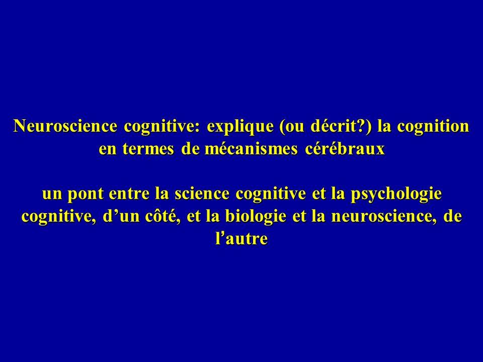 Neuroscience cognitive: explique (ou décrit
