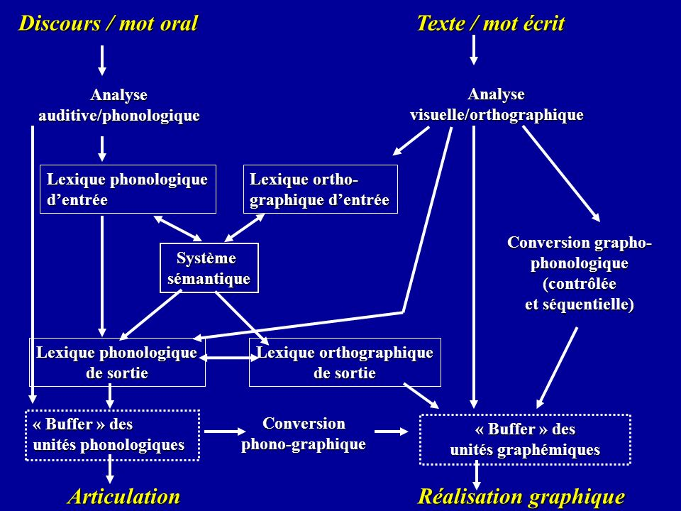 auditive/phonologique visuelle/orthographique Lexique orthographique