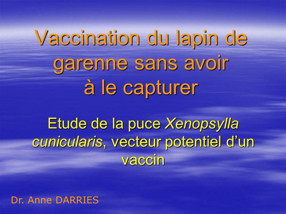 Vaccination du lapin de garenne sans avoir à le capturer