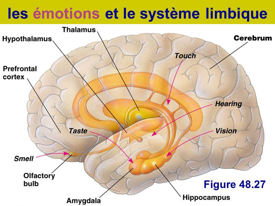 les émotions et le système limbique