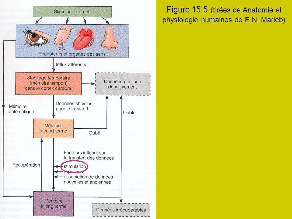 Figure 15. 5 (tirées de Anatomie et physiologie humaines de E. N