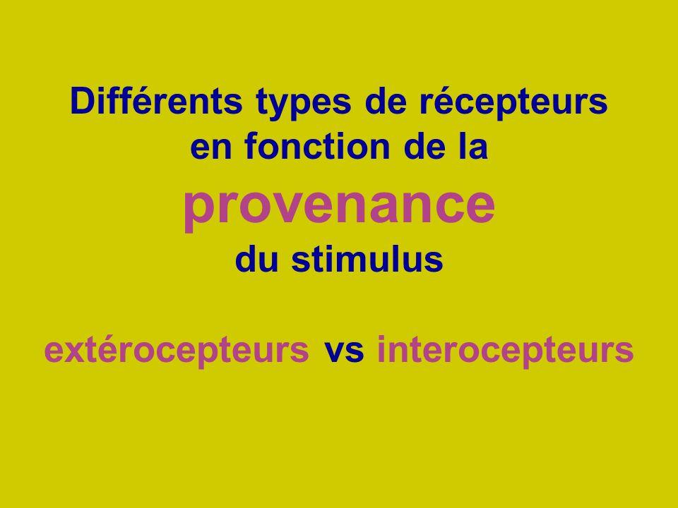 extérocepteurs vs interocepteurs