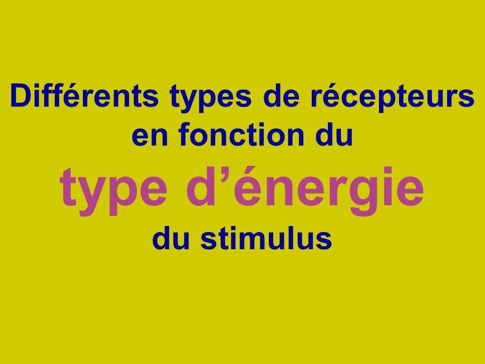 Différents types de récepteurs en fonction du type d'énergie du stimulus