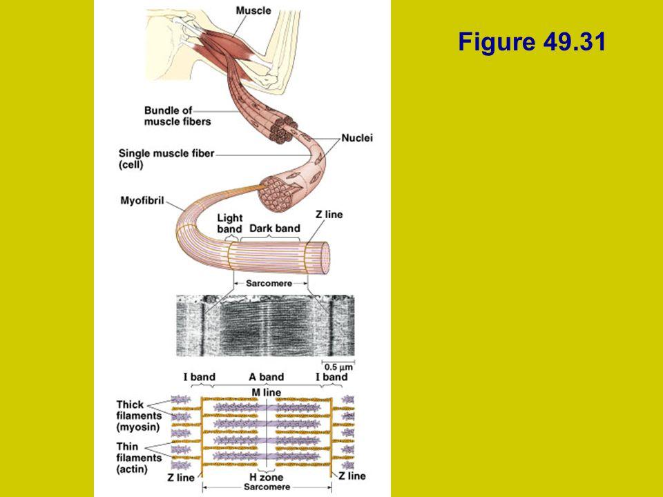 Figure 49.31