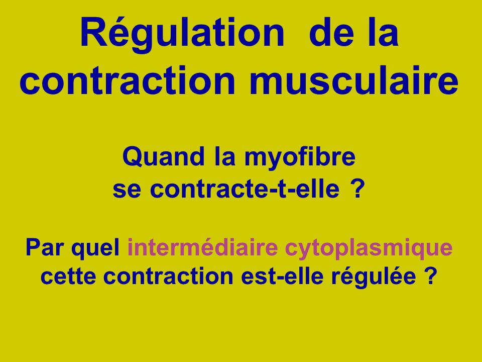 Régulation de la contraction musculaire